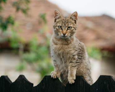 Cat Drugs Being Tested as Treatment for Coronavirus