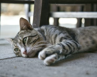 Five Signs Your Kitty Might Need Prozac