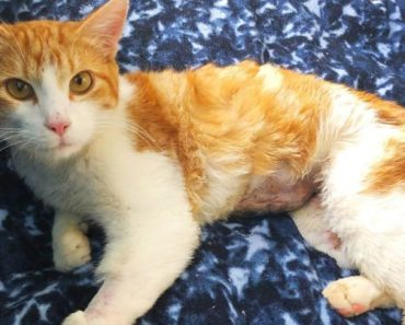 This Has to Stop: Utah Cat Set on Fire Sparks Manhunt for Abuser