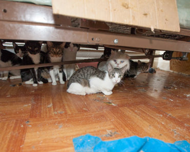 Hoarding Cats Study has Striking Results