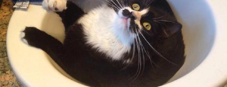 Why Do Cats Like to Sleep in Sinks?