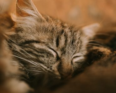 10 Signs You Might Have an Insecure Cat