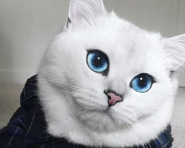 """Coby is Dubbed """"The World's Most Beautiful Cat"""""""