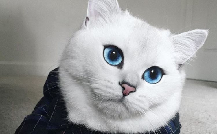 Coby Is Dubbed The World S Most Beautiful Cat