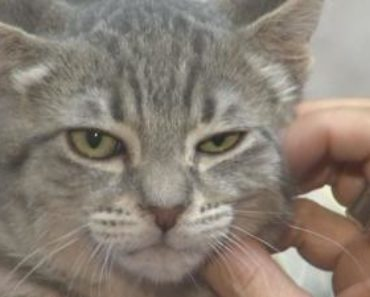 Judgy Rodger is the Latest Possible Successor to Grumpy Cat