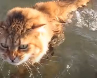 20 Things You Didn't Know About the Aegean Cat