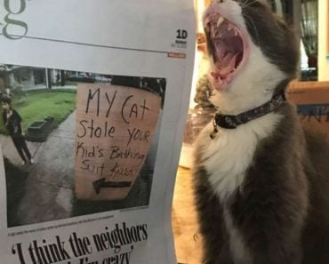 Louisiana Cat Ditches Life of Crime to Help Pets Impacted by Hurricane Laura