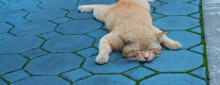 What a Cat's Sleeping Position Says about Them