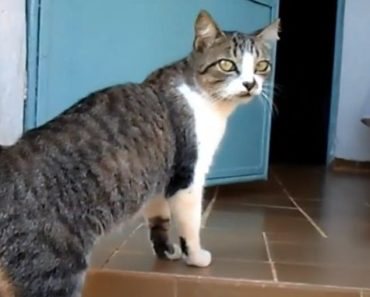20 Things You Didn't Know About the Brazilian Shorthair
