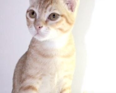 10 Things You Didn't Know About The Arabian Mau