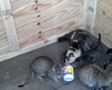 Can Cats Eat Mayonnaise?