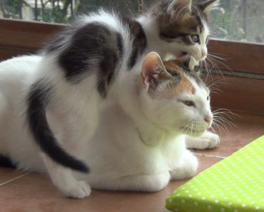 Why a Mother Cat Might Reject Her Young