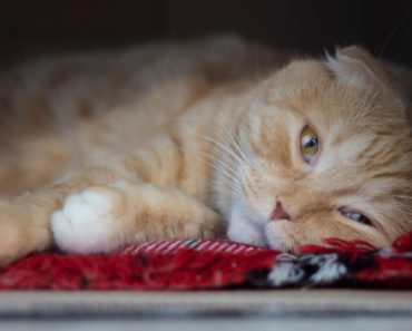 How Long Does Prozac Take to Work in Cats?