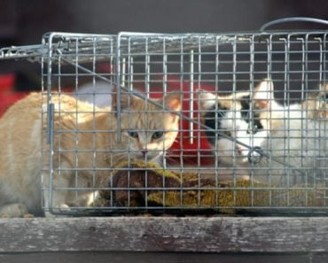 Shelter Fixing Community Cat Problem One Surgery At a Time
