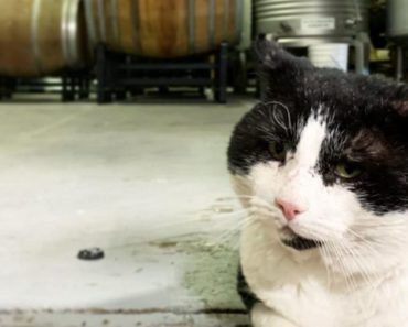 A Brewery Cat Gets His Own Beer Label