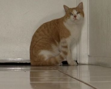 El Paso Cat Reunited with Owner Two years after Going Missing