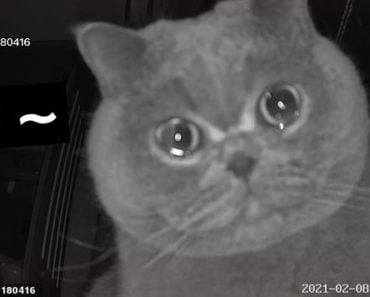 """Cat Appears to """"Cry"""" into Security Camera Upon Being Left Home Alone"""