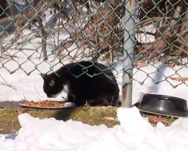 Woman Finds Cat Inside Taped Box near Supermarket