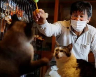 The Man Who Saves Cats in Fukushima's Nuclear Zone
