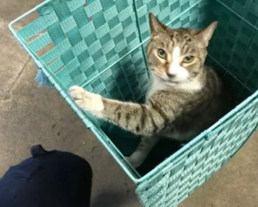 Cat Injured in Fire Gets a New Home From a Firefighter