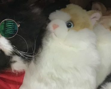 Florida Cat Competed For the Chance to Become the Next Cadbury Bunny