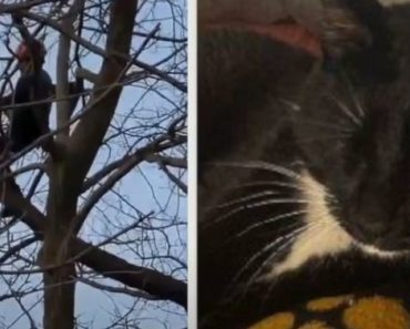 Tree Trimmer in Michigan Climbs 50 Feet to Rescue Stranded Cat