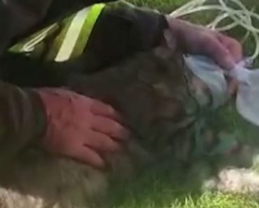 Firefighter Uses CPR to Resuscitate Cat after Major Garage Fire