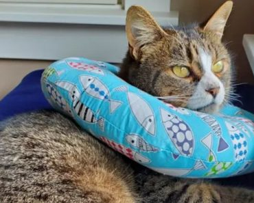 Why Do Cats Tuck Their Paws?