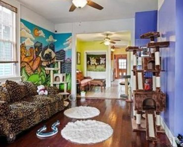 New Orleans Home For Sale Doubles as a Cat Rescue