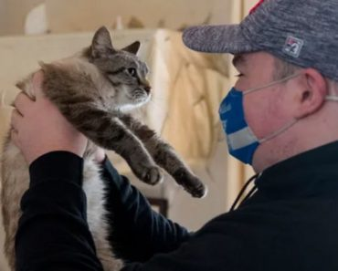 Cat Lost After Hurricane Michael, Found in Evansville