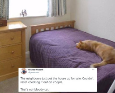 Man Sees His Cat in Neighbor's Real Estate Listing