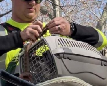 Neighborhood Comes Together to Save Cat in a Tree