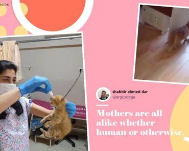 Stray Cat in Turkey Taking Kitties to Vet Goes Viral