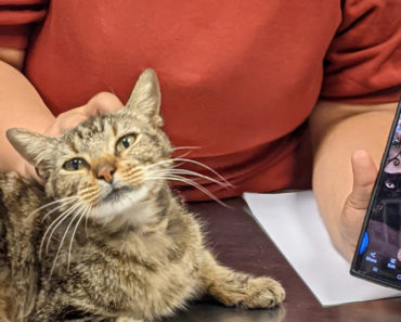 Cat Named Cookie Missing For Three Years Reunited With Family