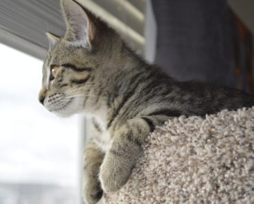 What is Cat Perching and Why Do They Love It?