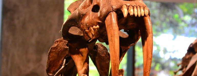 This Cat Hunted Rhinos in North America Millions of Years Ago