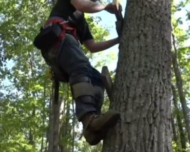 Man Climbs 60 Feet to Save Cat Stuck in a Tree for Five Days