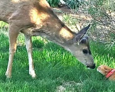 A Deer And Cat are Lifting Spirits Throughout an Entire Community