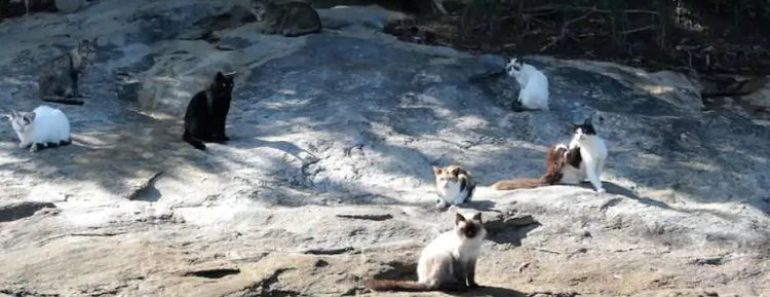 People Have Abandoned Hundreds of Cats on a Deserted Brazilian Island