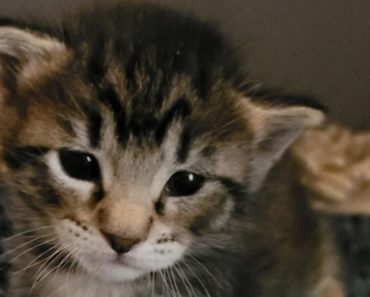 Snapchat Post Leads to Recovery of Cat-Napped Kitten