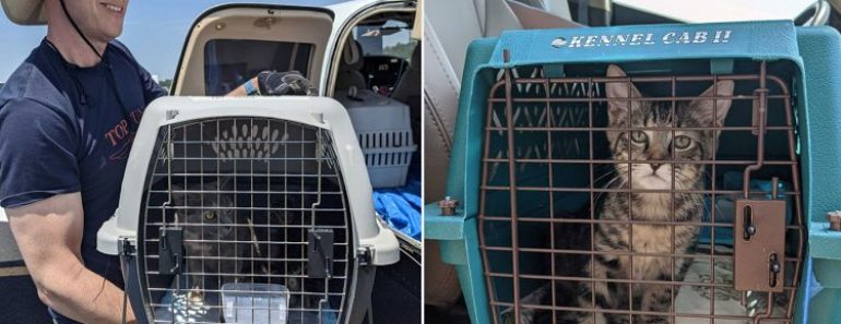 Rescue Pilot Flies 51 At-Risk Cats to New England Shelter