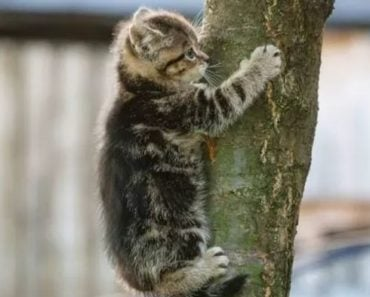 Cat Stuck in Tree Rescued By Private Tree Service After Officials Denied Responsibility