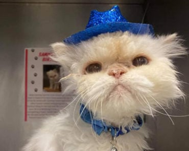 Animal Shelter Throws Adorable Party for 19-Year-Old Senior Cat