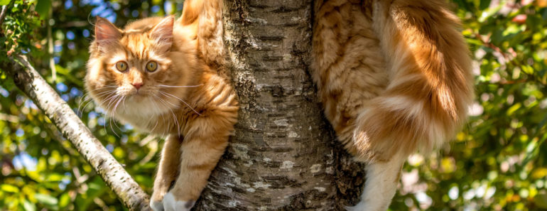 Sometimes Cat Rescuers Get Stuck in Trees Too: Like This One