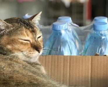 Why You Shouldn't Give Your Cat Bottled Water