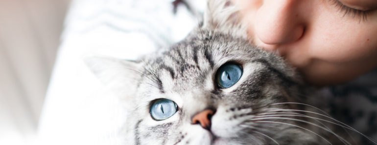 Is There a Way to Tell if Your Cat Misses You?