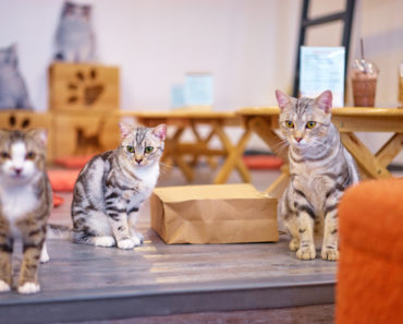 London's Latest Cat Cafe that's Helping Homeless Felines