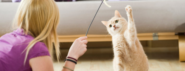 How to Get a Cat to Stop Nursing on Random Objects