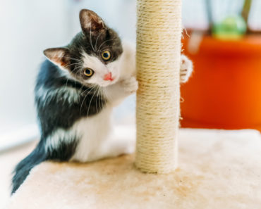 Why Your Cat Sharpens its Claws