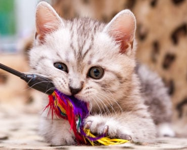 The Five Best Motorized Cat Toys Money Can Buy